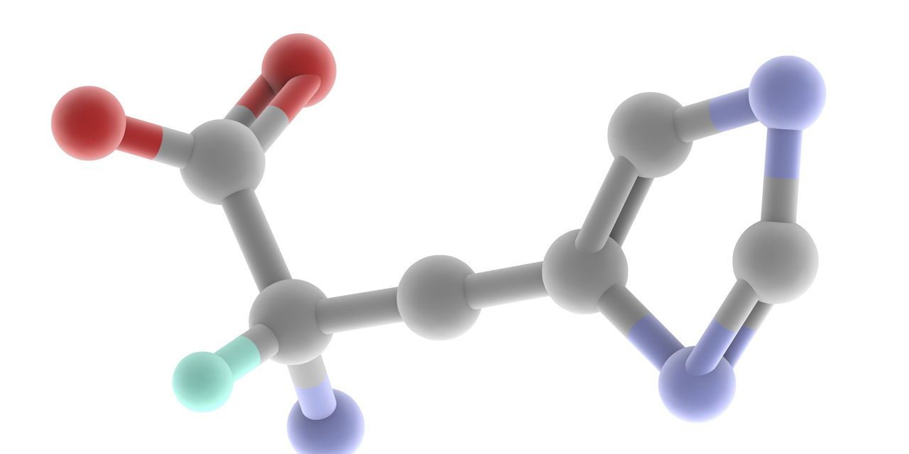 Amino acids: the building blocks of life